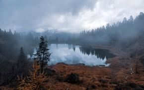Картинка осень, туман, озеро