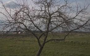 Картинка трава, дерево, яблоня