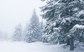 Картинка зима, снег, деревья, пейзаж, зимний, елки, landscape, nature, beautiful, winter, snow, fir tree