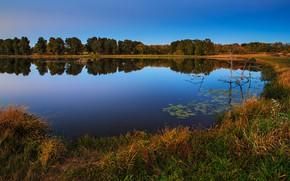Картинка осень, лес, отражение, синева, берег, водоем, сухая трава