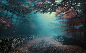 Картинка дорога, осень, лес, туман, листва, утро, дымка, брёвна