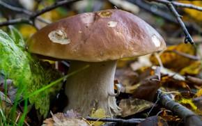Картинка осень, листья, гриб