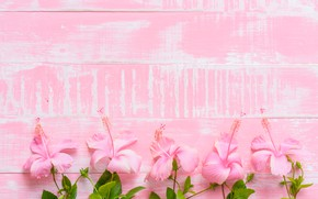 Картинка цветы, фон, розовый, wood, pink, flowers