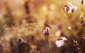 Картинка паук, осень, паутина, природа