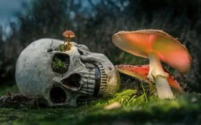 Картинка природа, рендеринг, грибы, череп, мох, мухоморы, боке, фотоарт, глазницы, смерть некомпетентного грибника