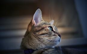 Картинка кошка, глаза, морда