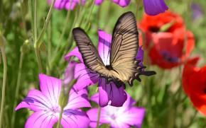 Картинка цветы, бабочка, размытие, насекомое