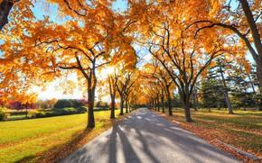 Картинка road, autumn, tree