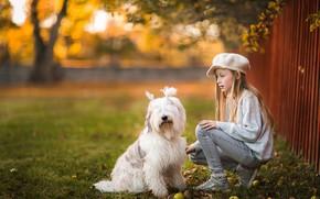 Картинка осень, свет, настроение, забор, собака, дружба, девочка, белая, друзья, хвостики