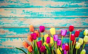 Картинка цветы, доски, colorful, тюльпаны, wood, flowers, tulips, grunge