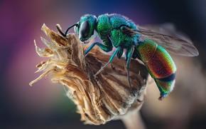 Картинка макро, природа, оса, насекомое