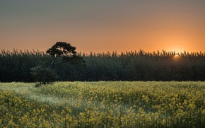 Картинка поле, лето, небо, солнце, лучи, свет, закат, цветы, дерево, рассвет, поляна, вечер, утро, желтые, луг, …