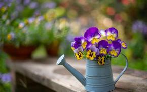Картинка лето, цветы, скамейка, мило, букет, желтые, сад, лейка, анютины глазки, горшки, букетик, сиреневые, боке, композиция, …