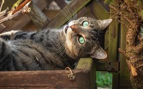 Картинка кошка, кот, взгляд, забор, ящик