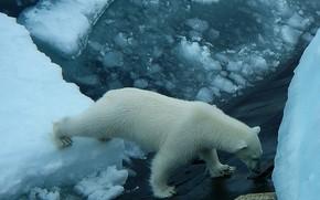 Картинка субмарина, белый медведь, север, гость, к84
