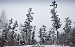 Картинка зима, иней, дорога, лес, небо, снег, деревья, сосны, силуэты, кусты