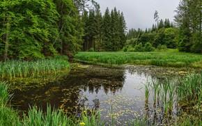 Картинка зелень, лес, трава, деревья, пруд, камыши, Германия, Бавария, Augsburg, Landkreis