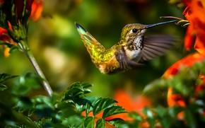 Картинка листья, цветы, ветки, природа, колибри, птичка