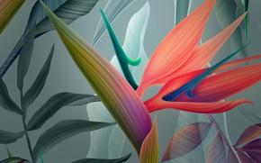 Картинка цветок, вектор, лепестки