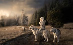 Картинка дорога, собаки, девочка