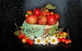 Картинка природа, настроение, яблоки, ромашки, красота, корзинка, красивые, beautiful, китайка, beauty, harmony, обои на рабочий стол, …