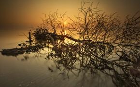 Картинка солнце, закат, дерево, вечер