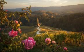 Картинка цветы, природа, Холмы, домики, Краси Матаров