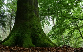 Картинка осень, лес, деревья, природа, красота