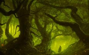 Картинка Зелень, Лес, Стволы