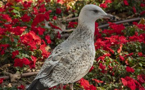 Картинка цветы, птица, чайка