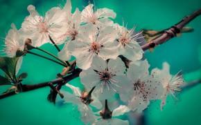 Картинка ветка, весна, май