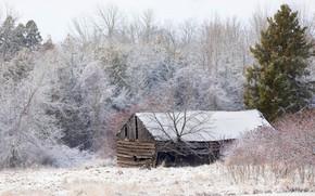 Картинка зима, лес, снег, деревья, сарай