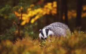 Картинка осень, лес, трава, взгляд, листья, деревья, природа, поза, фон, настроение, стволы, растительность, листва, нос, прогулка, …