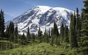 Картинка лес, пейзаж, природа, гора, красота, простор