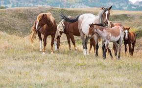 Картинка природа, кони, лошади, стадо