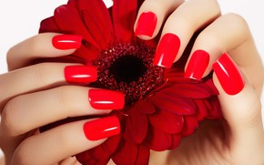 Картинка цветок, Руки, пальцы, маникюр, гербера