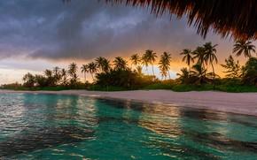 Картинка пальмы, тучи, природа, побережье, дождь, океан, Valentin Valkov, тропики, пейзаж