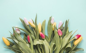 Картинка цветы, colorful, тюльпаны, fresh, flowers, tulips, spring, multicolored