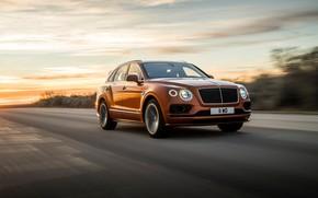 Картинка машина, асфальт, движение, фары, скорость, Bentley, оптика, Speed, кроссовер, Bentayga