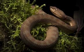 Обои природа, змея, рептилия, хладнокровное животное