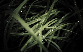 Картинка трава, капли, роса, дождь, темные обои