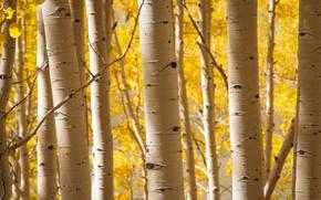 Картинка осень, деревья, роща