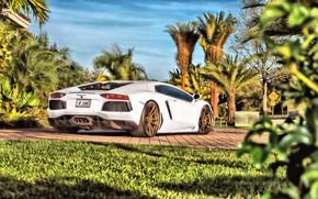 Обои Lamborghini, Aventador, Lamborghini Aventador, Ламборгини Авентадор