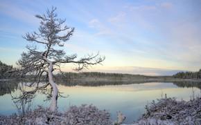 Обои осень, озеро, дерево