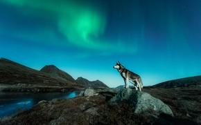 Картинка горы, ночь, природа, река, берег, растительность, камень, склоны, собака, северное сияние, силуэт, стоит, сумерки, водоем, …