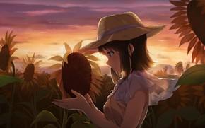 Картинка поле, подсолнухи, вечер, девочка
