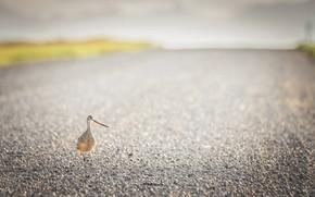 Картинка Alberta, Bird, gravel road
