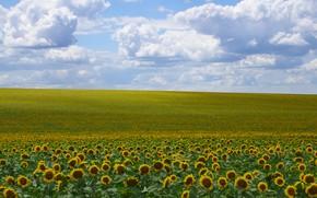 Картинка поле, небо, подсолнух, солнечный день, облока, поле подсолнухов