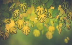 Картинка листья, макро, ветки, листва