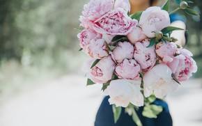 Картинка цветы, пионы, Anita Austvika